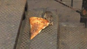 Pizza Rat NYC goes viral